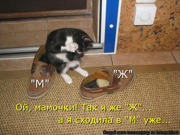 "Котоматрица: ""М"" ""Ж"" Ой, мамочки! Так я же ""Ж""... а я сходила в ""М"" уже..."