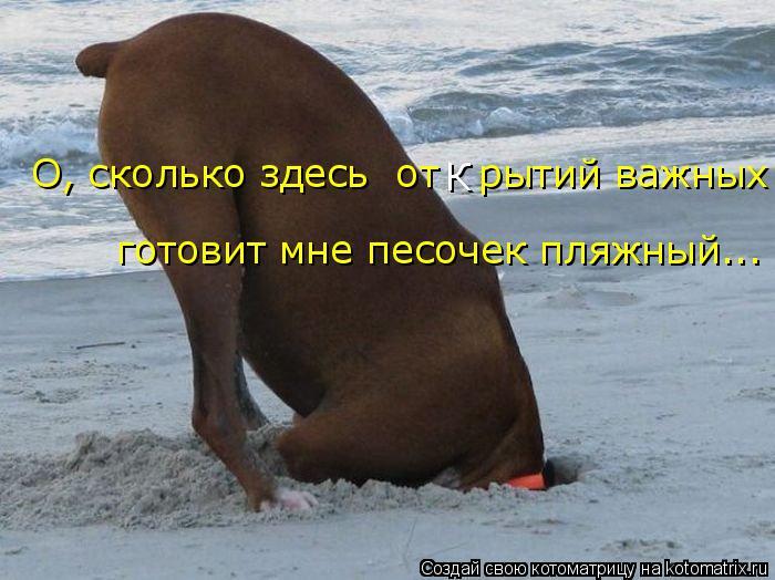 Котоматрица: О, сколько здесь  от   рытий важных готовит мне песочек пляжный... К