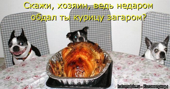 Котоматрица: Скажи, хозяин, ведь недаром  обдал ты курицу загаром?