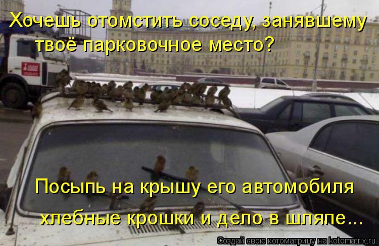 Котоматрица: Хочешь отомстить соседу, занявшему твоё парковочное место? Посыпь на крышу его автомобиля хлебные крошки и дело в шляпе...