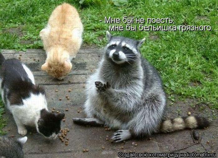 - Мне бы не поесть, мне бы бельишка грязного...