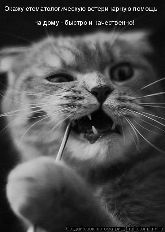 Котоматрица: Окажу стоматологическую ветеринарную помощь на дому - быстро и качественно!