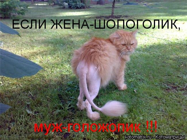 http://kotomatrix.ru/images/lolz/2010/09/29/691577.jpg