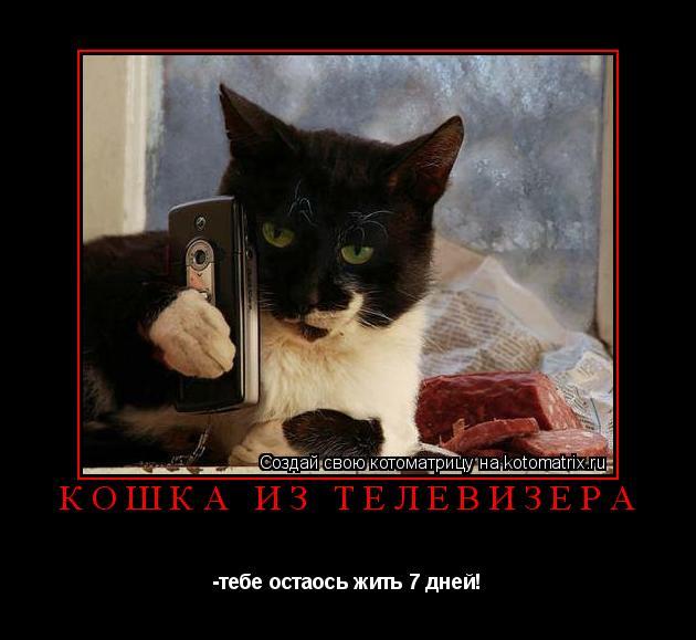 Котоматрица: Кошка из телевизера -тебе остаось жить 7 дней!