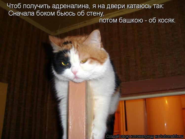 http://kotomatrix.ru/images/lolz/2010/09/30/691719.jpg