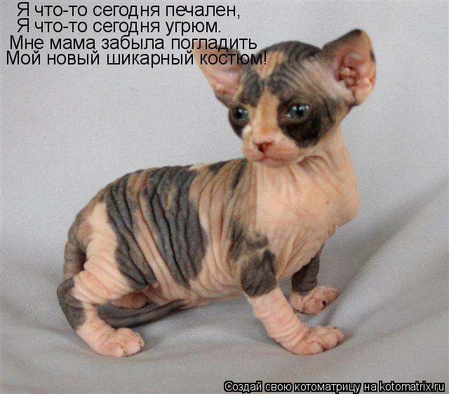 98 раз коты и кошки запись понравилась