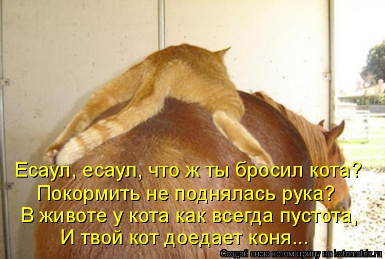 Котоматрица: Есаул, есаул, что ж ты бросил кота? Покормить не поднялась рука? В животе у кота как всегда пустота, И твой кот доедает коня...
