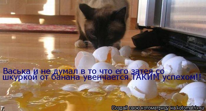 Котоматрица: Васька и не думал в то что его затея со шкуркой от банана увенчается ТАКИМ успехом!!