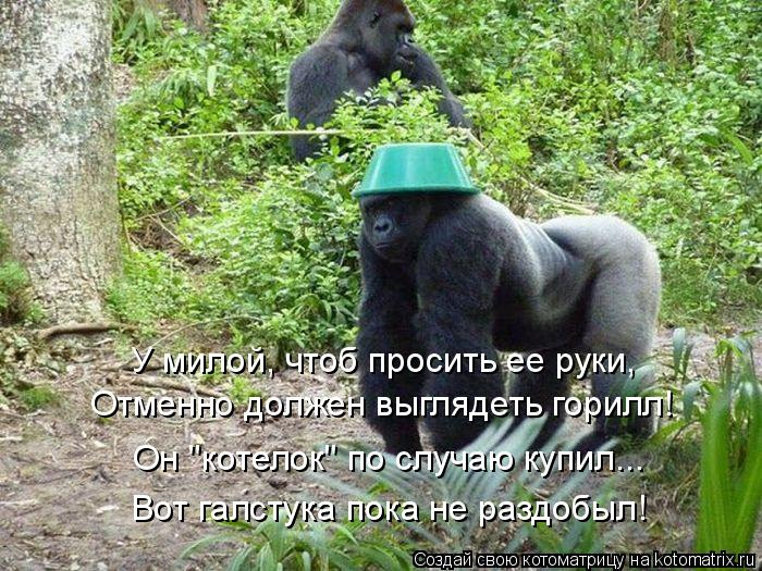 """Котоматрица: У милой, чтоб просить ее руки, Отменно должен выглядеть горилл! Он """"котелок"""" по случаю купил... Вот галстука пока не раздобыл!"""