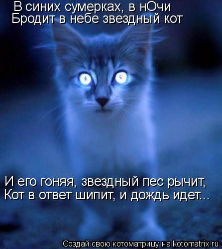 Котоматрица: В синих сумерках, в нОчи Бродит в небе звездный кот И его гоняя, звездный пес рычит, Кот в ответ шипит, и дождь идет...