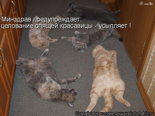 Котоматрица - Минздрав предупреждает: целование спящей красавицы - усыпляет !