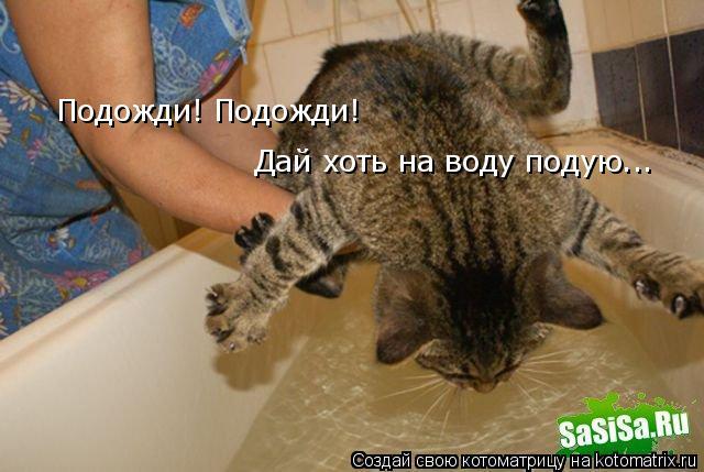 Котоматрица: Подожди! Подожди!  Дай хоть на воду подую...