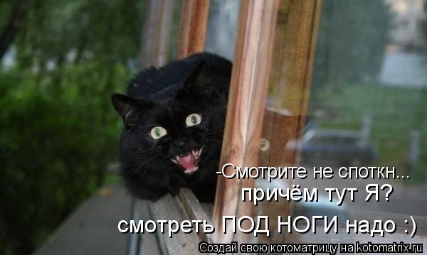 Котоматрица: -Смотрите не споткн... причём тут Я? смотреть ПОД НОГИ надо :)