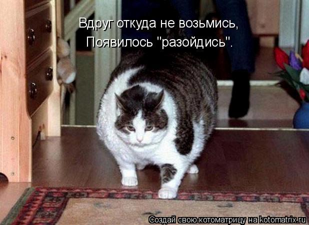 """Котоматрица: Вдруг откуда не возьмись, Появилось """"разойдись""""."""