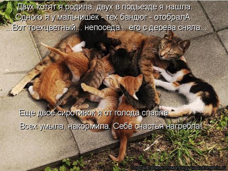 Котоматрица: Двух котят я родила, двух в подъезде я нашла. Одного я у мальчишек - тех бандюг - отобралА ...Вот трехцветный... непоседа... его с дерева сняла... Е