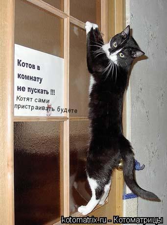 Котоматрица: Котят сами пристраивать будете