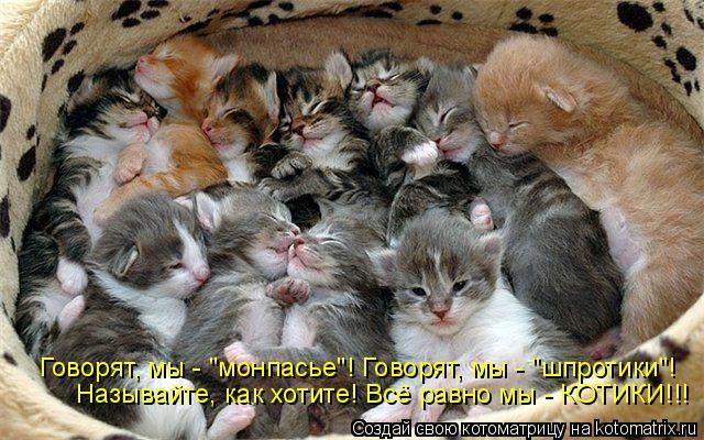 """Котоматрица: Говорят, мы - """"монпасье""""! Говорят, мы - """"шпротики""""! Называйте, как хотите! Всё равно мы - КОТИКИ!!!"""