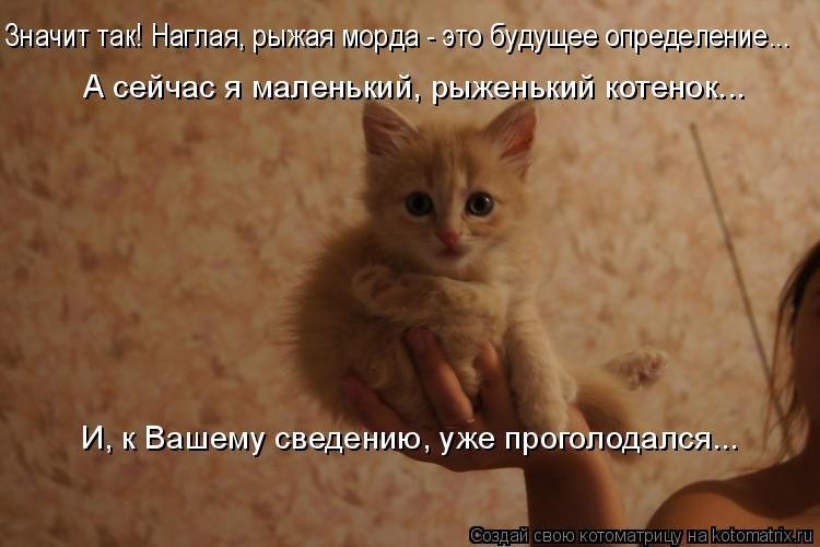 Котоматрица: Значит так! Наглая, рыжая морда - это будущее определение...  А сейчас я маленький, рыженький котенок...  И, к Вашему сведению, уже проголодался.