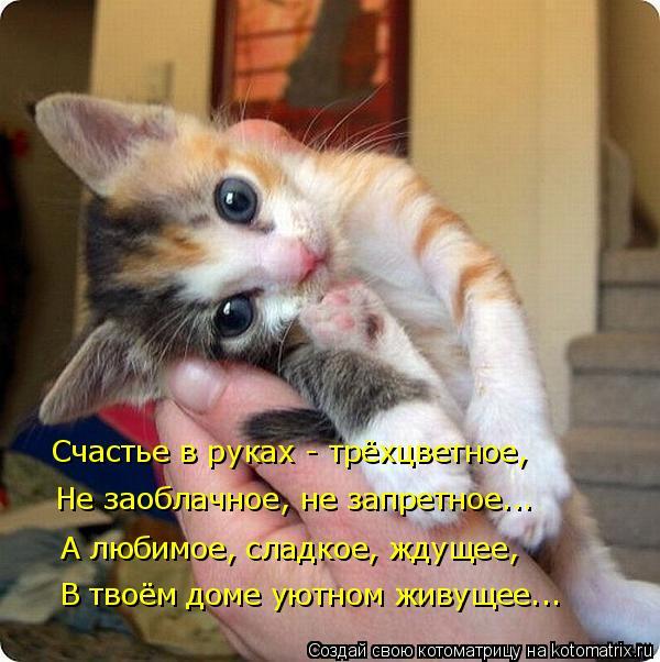 Котоматрица: Счастье в руках - трёхцветное, Не заоблачное, не запретное... А любимое, сладкое, ждущее, В твоём доме уютном живущее...