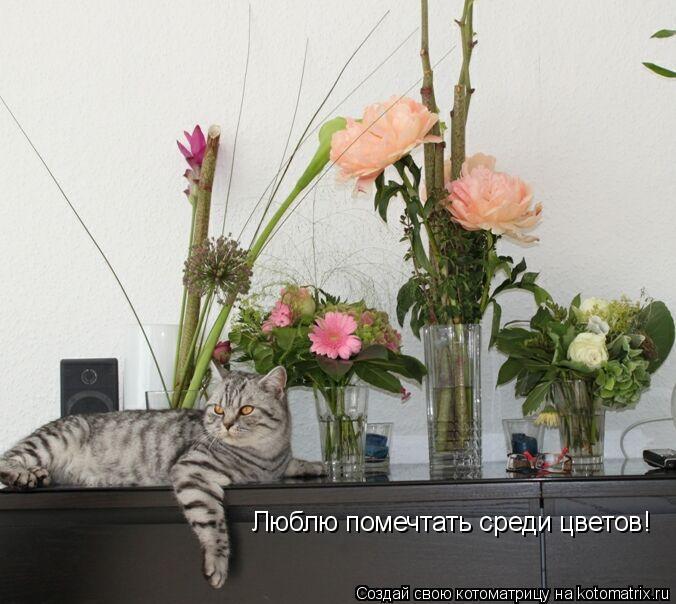 Котоматрица: Люблю помечтать среди цветов!