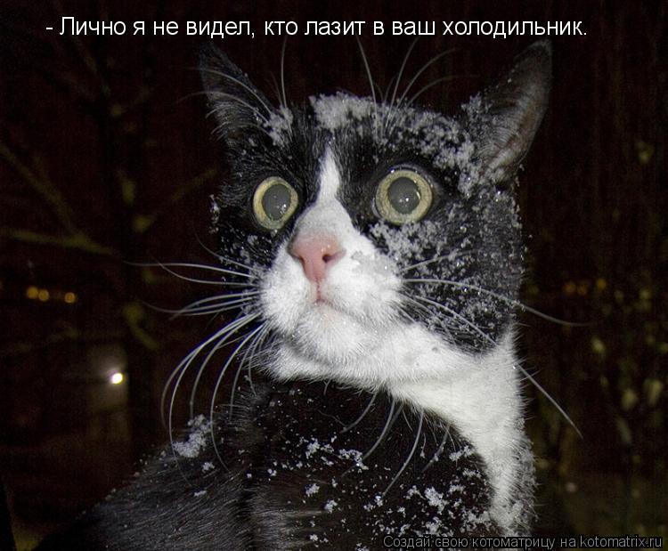 Котоматрица: - Лично я не видел, кто лазит в ваш холодильник.