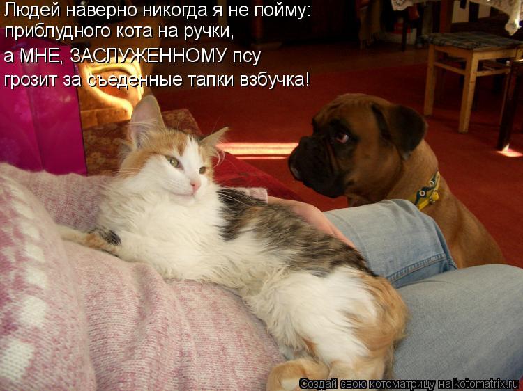 Котоматрица: Людей наверно никогда я не пойму: приблудного кота на ручки, а МНЕ, ЗАСЛУЖЕННОМУ псу  грозит за съеденные тапки взбучка!