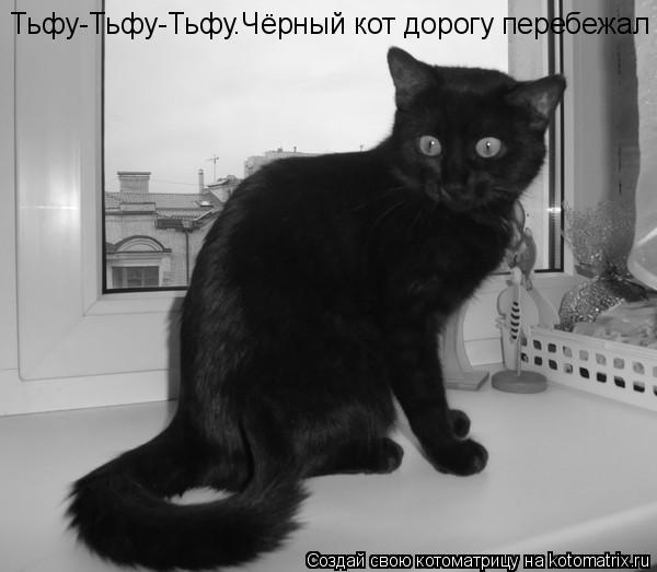Котоматрица: Тьфу-Тьфу-Тьфу.Чёрный кот дорогу перебежал