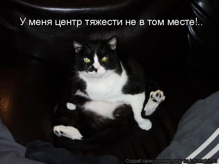 Котоматрица: У меня центр тяжести не в том месте!..