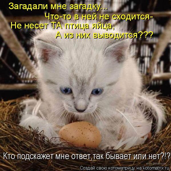 Котоматрица: Загадали мне загадку... Что-то в ней не сходится- Не несет ТА птица яйца, А из них выводится??? Кто подскажет мне ответ,так бывает или нет?!?