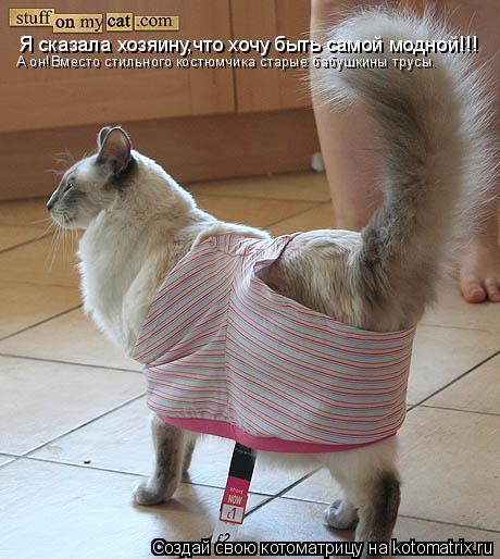 Котоматрица: Я сказала хозяину,что хочу быть самой модной!!! А он!Вместо стильного костюмчика старые бабушкины трусы.
