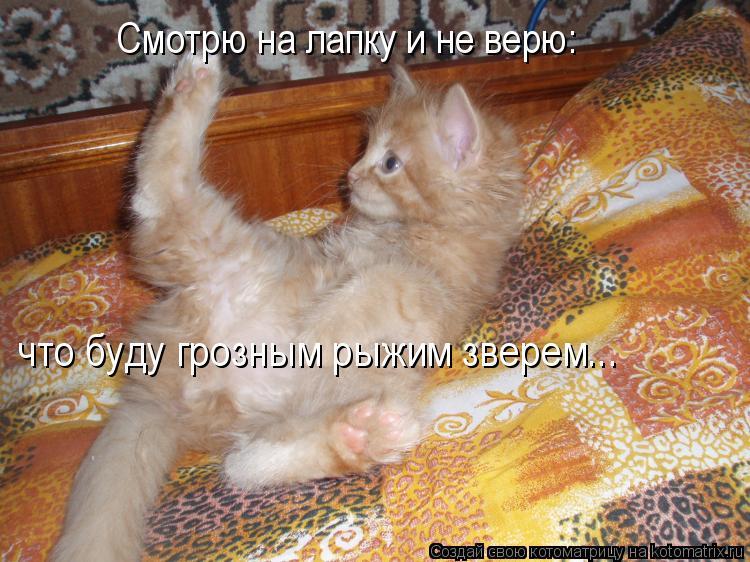 Котоматрица: Смотрю на лапку и не верю: что буду грозным рыжим зверем...