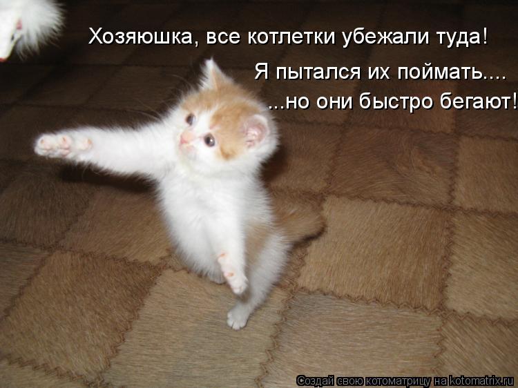 Котоматрица: Хозяюшка, все котлетки убежали туда! Я пытался их поймать.... ...но они быстро бегают!