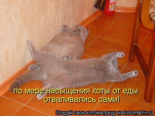 Котоматрица: по мере насыщения коты от еды отваливались сами!