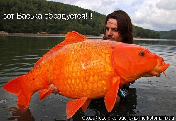 Котоматрица: вот Васька обрадуется!!!