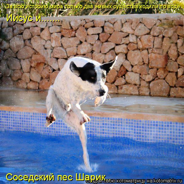 Котоматрица: За всю историю мира только два живых существа ходили по воде. Иисус и....... Соседский пес Шарик..