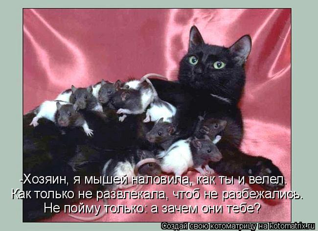 -Хозяин, я мышей наловила, как ты и велел. Как только не развлекала, ч
