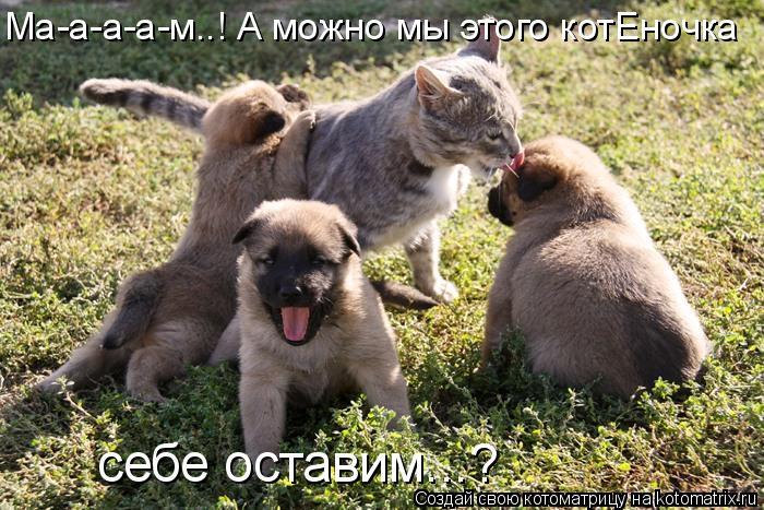 Котоматрица: Ма-а-а-а-м..! А можно мы этого котЕночка себе оставим...?