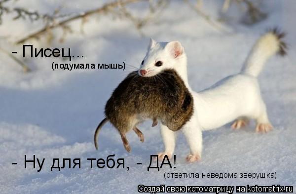 Котоматрица: - Писец...  (подумала мышь) - Ну для тебя, - ДА! (ответила неведома зверушка)