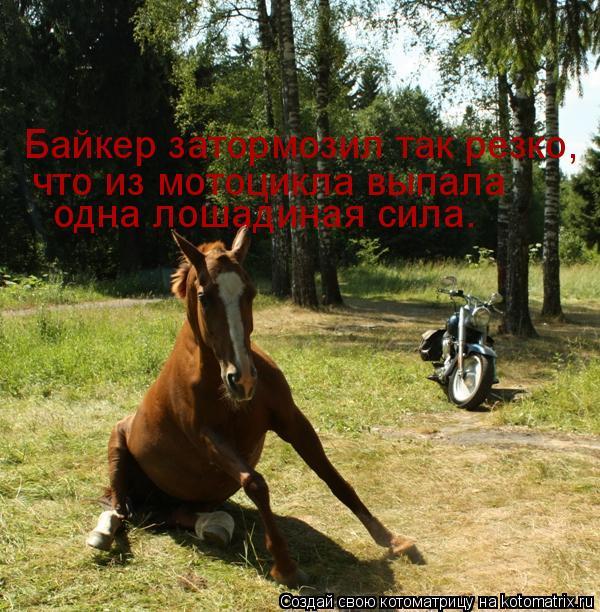 Котоматрица: Байкер затормозил так резко, что из мотоцикла выпала одна лошадиная сила.