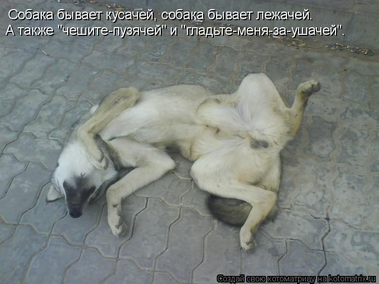"Котоматрица: Собака бывает кусачей, собака бывает лежачей. А также ""чешите-пузячей"" и ""гладьте-меня-за-ушачей""."