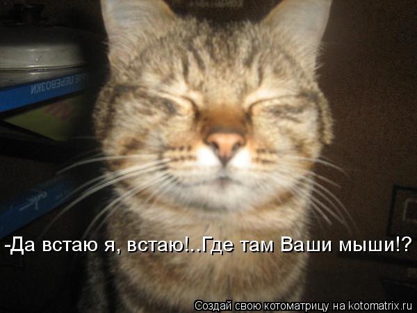 Котоматрица: -Да встаю я, встаю!..Где там Ваши мыши!?