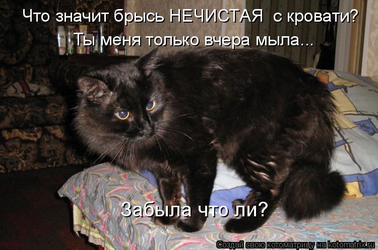 Котоматрица: Что значит брысь НЕЧИСТАЯ  с кровати?  Ты меня только вчера мыла...  Забыла что ли?