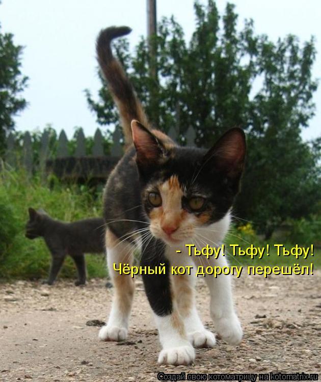 Котоматрица: - Тьфу! Тьфу! Тьфу! Чёрный кот дорогу перешёл!