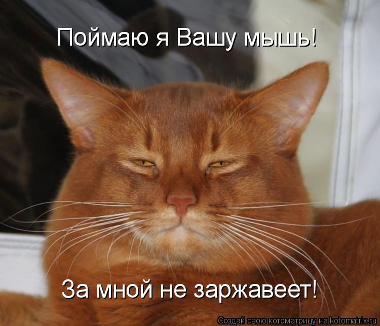Котоматрица: Поймаю я Вашу мышь! Поймаю я Вашу мышь! За мной не заржавеет!