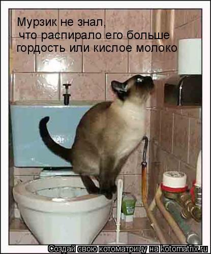 Котоматрица: Мурзик не знал,  что распирало его больше гордость или кислое молоко
