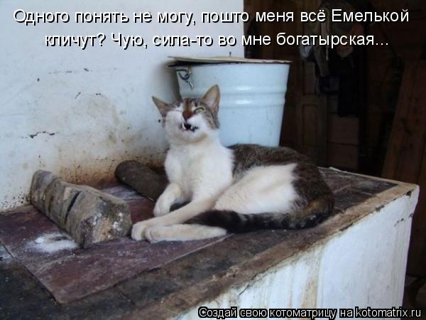 Котоматрица: Одного понять не могу, пошто меня всё Емелькой кличут? Чую, сила-то во мне богатырская...