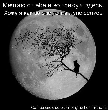 Котоматрица: Мечтаю о тебе и вот сижу я здесь, Хожу я как во сне,ты на Луне селись