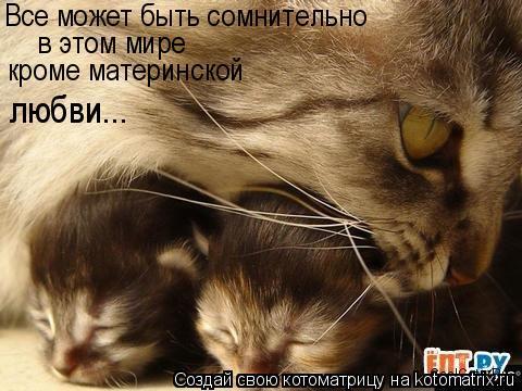Котоматрица: Все может быть сомнительно  в этом мире кроме материнской  любви...
