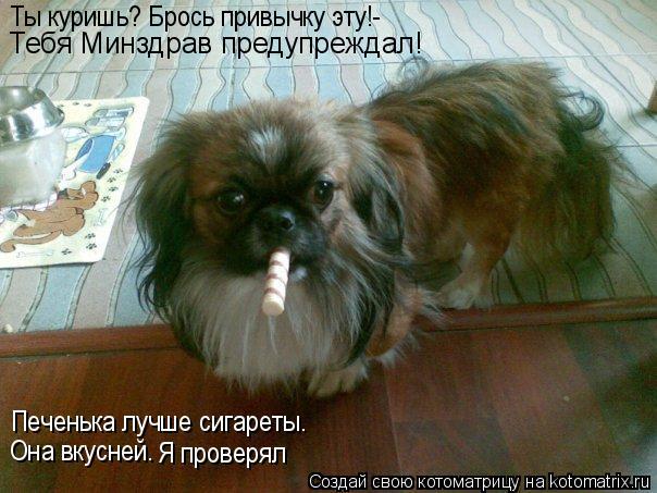 Котоматрица: Ты куришь? Брось привычку эту!- Тебя Минздрав предупреждал! Печенька лучше сигареты. Она вкусней. Я проверял