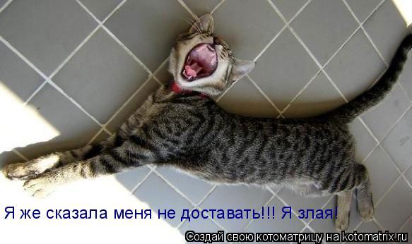 Котоматрица: - Я же сказала меня не доставать!!! Я злая! Я же сказала меня не доставать!!! Я злая!